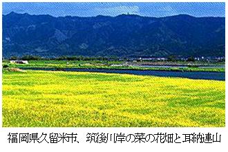 福岡県久留米市、筑後川岸の菜の花畑と耳納連山